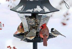 Decoding Mixed Winter Flock Behavior