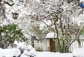 Winter Gardening: Tips to Add Color