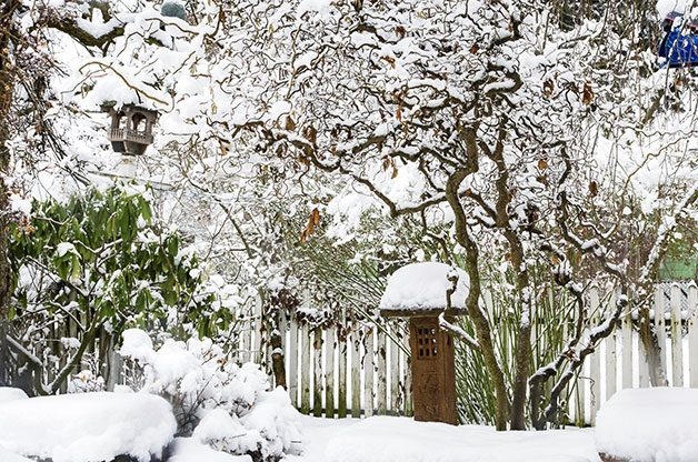 Winter Gardening Idea: Trees like Harry Lauder's walking stick add architecture to winter landscapes.