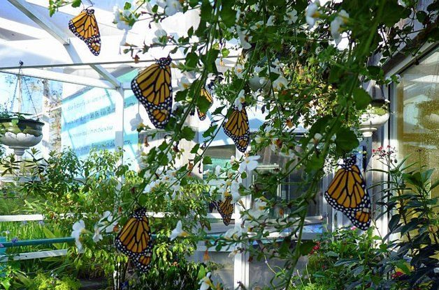 Monarch Roosting Butterfly Garden