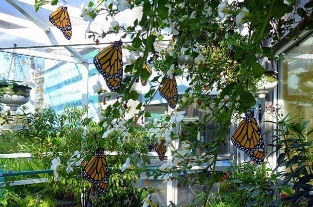 Monarch Roosting Butterfly Garden