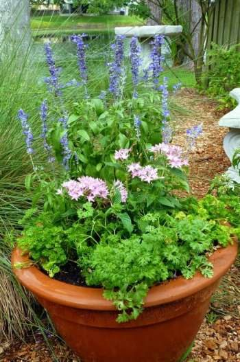 Parsley Butterfly Planter