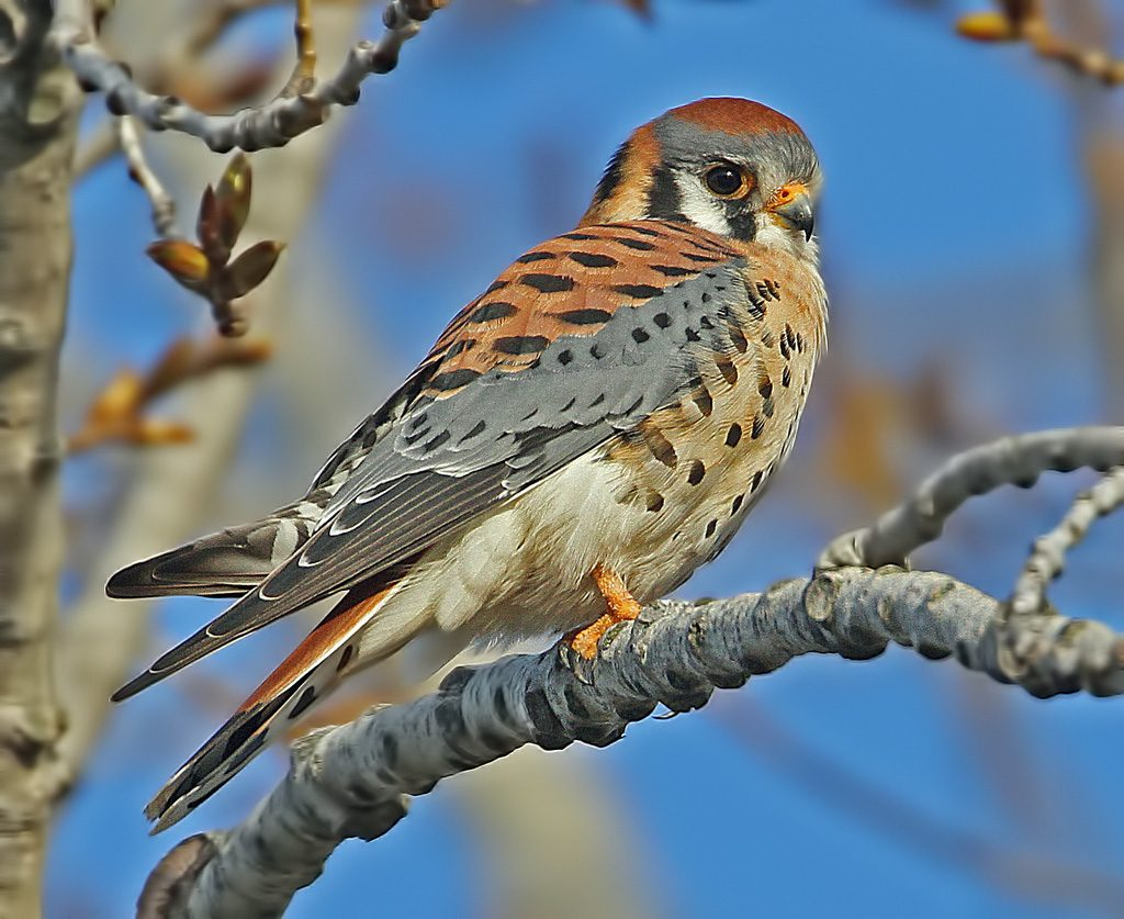 birds and blooms contests elhouz click for details birds and blooms ...