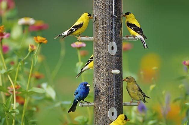 How to Maintain Backyard Bird Feeders