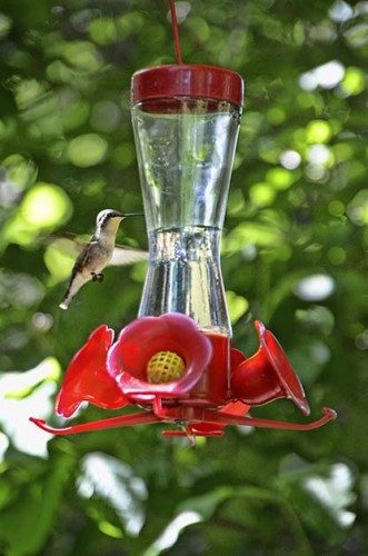 How to Maintain Backyard Bird Feeders