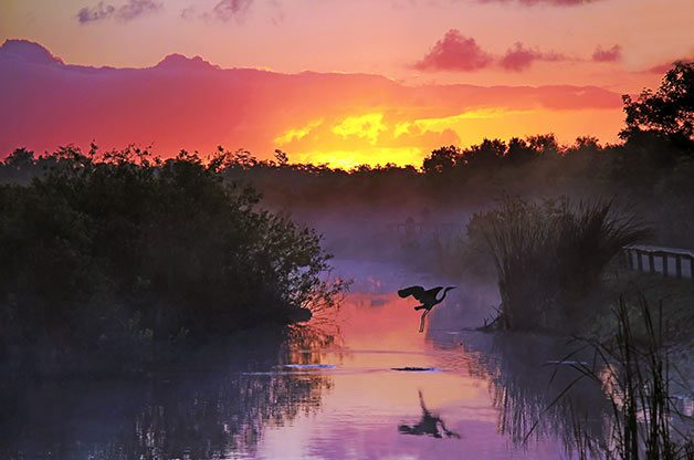 Birding Sites: Heron at Everglades National Park