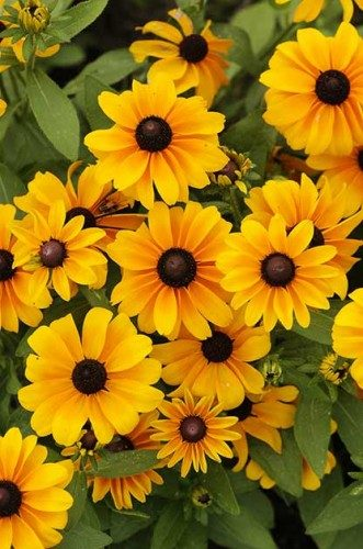 Gardening Basics To Keep Your Plants Healthy