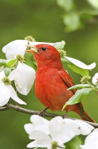 Top Songbirds In America