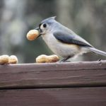 Attract More Backyard Birds by Feeding Peanuts