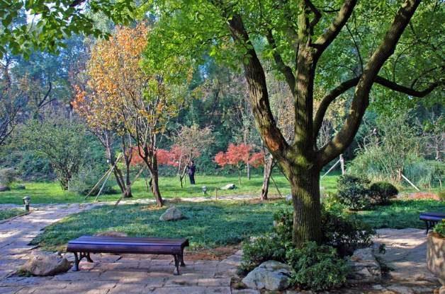 Chinese Garden Changsha Park