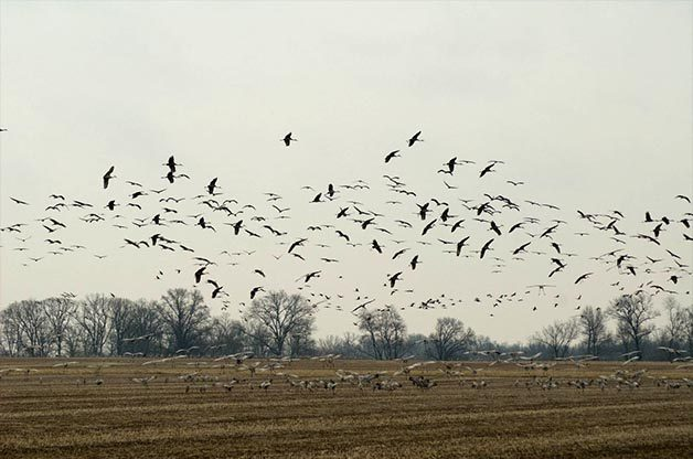 This is just a small sample of the type of flocks you might find at these birding hotspots.