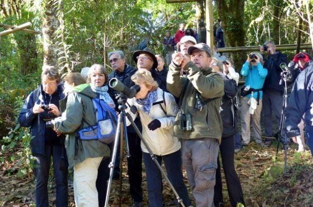 Crowd Viewing Resplendent Quetzal Costa Rica