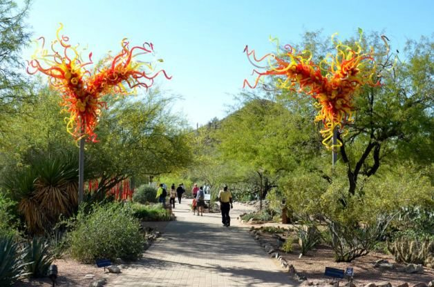 The Desert Botanical Garden in Phoenix, Arizona