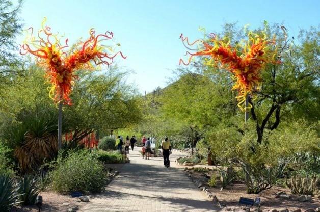 The Desert Botanical Garden in Phoenix, Arizona