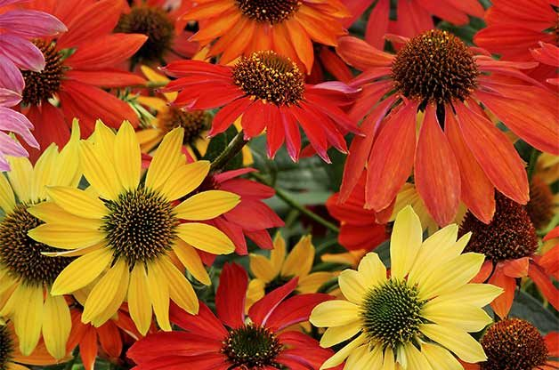 Top 10 New Plants for 2015