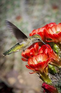 """The """"Birdiest"""" Botanical Gardens"""