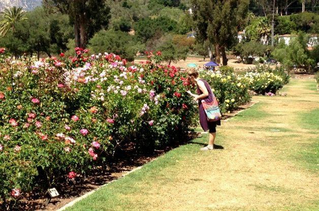 Santa Barbara Mission Rose Garden