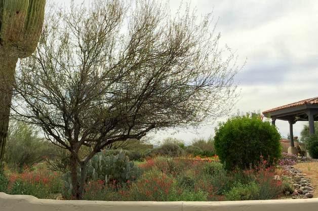 Southwestern Winter Landscape 4