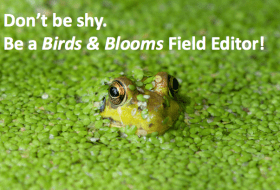 How to Become a Birds & Blooms Field Editor