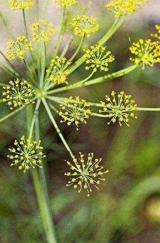 Grow a Chemical-Free Garden