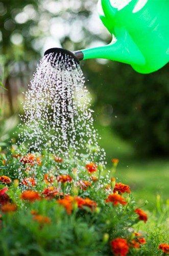13 Garden Myths