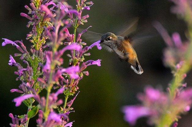 Go See Hummingbirds in Sedona