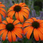 The Best Websites to Order Plants Online