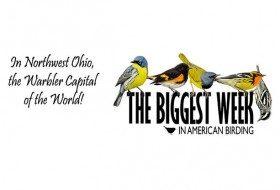 The Biggest Week in American Birding