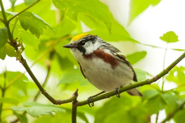Top 5 Great Lakes Birding Hotspots for Spring Migration