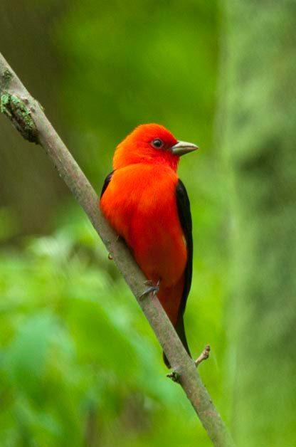 5 Bird Photography Tips