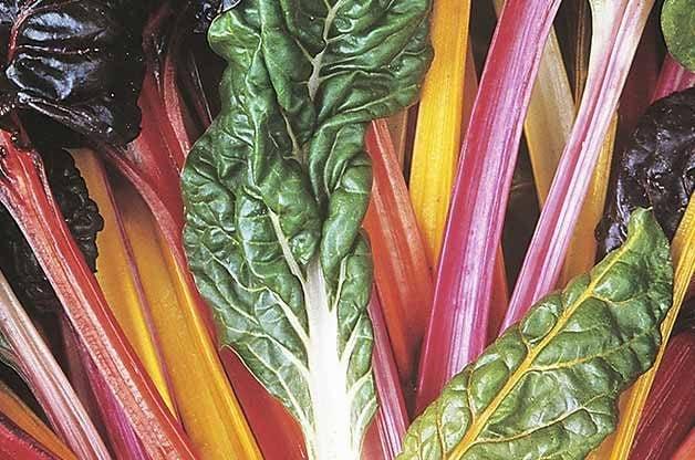 Top 10 Easy-to-Grow Veggies | Birds & Blooms