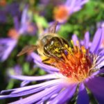 Top 10 Plants For Bees and Pollinators