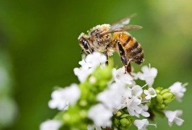 4 Facts About Native Bees in Your Backyard