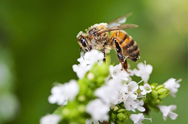 How to Help Native Bees in Your Backyard | Birds & Blooms
