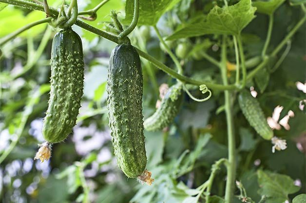 Top 10 Easy-to-Grow Veggies | Birds & Blooms