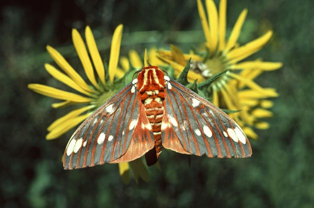 Spotlight On Moths | Birds & Blooms