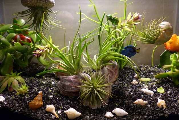 Aquarium Mini Garden Fairy Gardening DIY Garden Projects