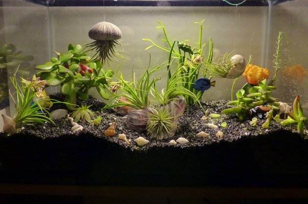 Aquarium Mini Garden