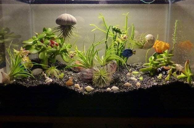 Merveilleux Aquarium Mini Garden