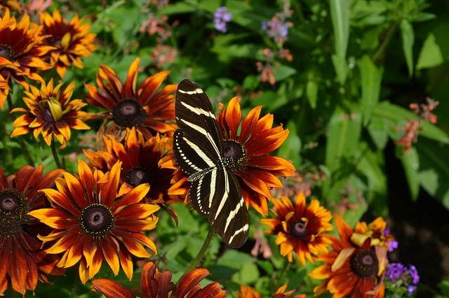 Flowers that Atract Butterflies