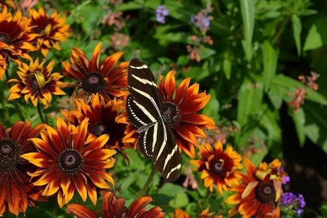Flowers that Atract Butterflies