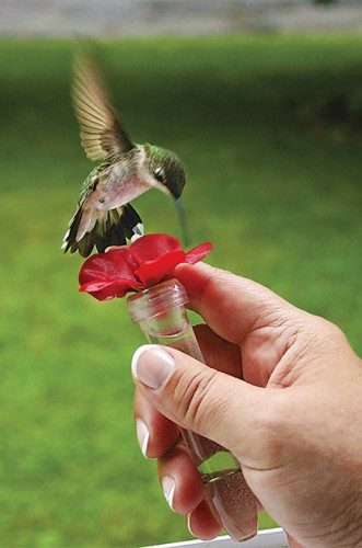 The Ultimate Bucket List for Hummingbird Lovers | Birds & Blooms
