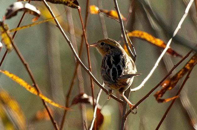 Explore Birding Hotspots in the Prairies of North Dakota this Summer