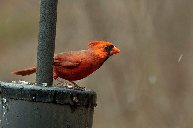 Bird Feeding Tips: Feeder Placement