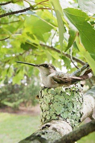 The Ultimate Bucket List for Hummingbird Lovers   Birds & Blooms