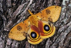 Spotlight On Moths