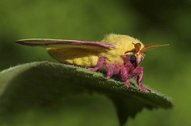 Spotlight On Moths | Birds & Blooms