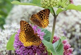 How to Attract Butterflies by Gardening