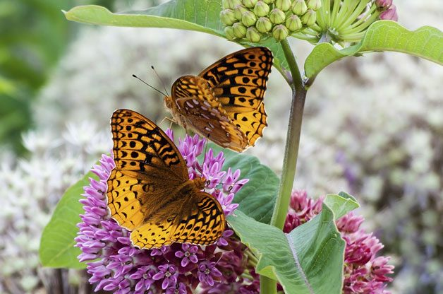 How to Attract Butterflies by Gardening | Birds & Blooms