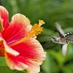 The Ultimate Bucket List for Hummingbird Lovers
